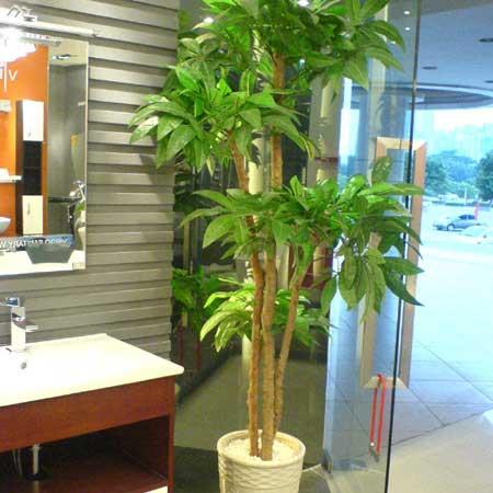 芒果树盆栽图片; 盆景系列;